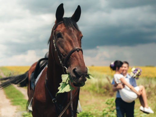 Свадебная фотосессия на конюшне